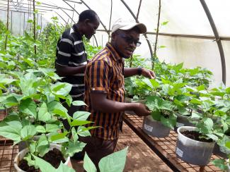 Two men undertaking research in plant laboratory