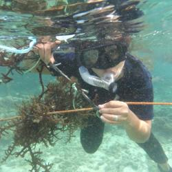 AuthorAID researcher Jonalyn Mateo researching seaweed.